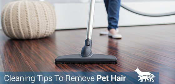 Cleaning Tips To Remove Pet Hair